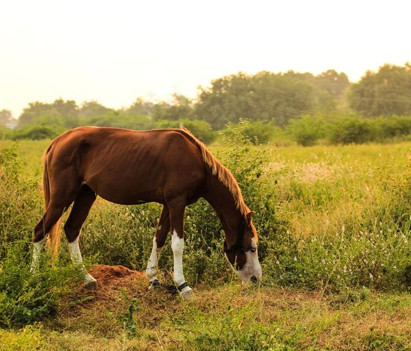 Animal Themes Animal Mammal Domestic Animals Livestock Vertebrate Animal Wildlife Horse Domestic Field One Animal Plant Pets Land Grass Grazing Nature Standing Agriculture Herbivorous No People Outdoors