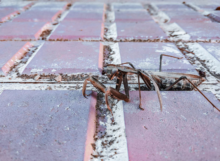 High angle view of insect on sidewalk