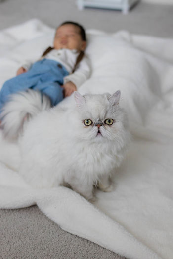 Portrait of cat lying on bed