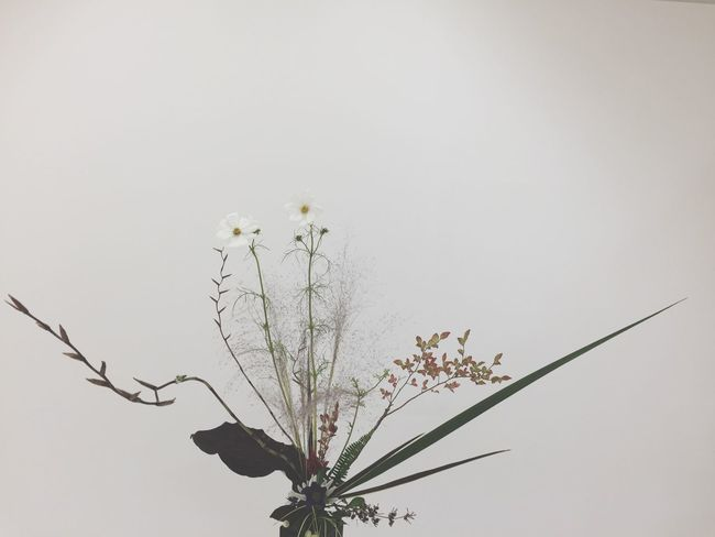 Flower Fragility Freshness Low Angle View Blossom Growth Springtime In Bloom Beauty In Nature Botany Day Nature Plant Focus On Foreground Petal Flower Head No People Tranquility IKENOBO IKEBANA 池坊 生け花 Flower Arrangement Art Faded