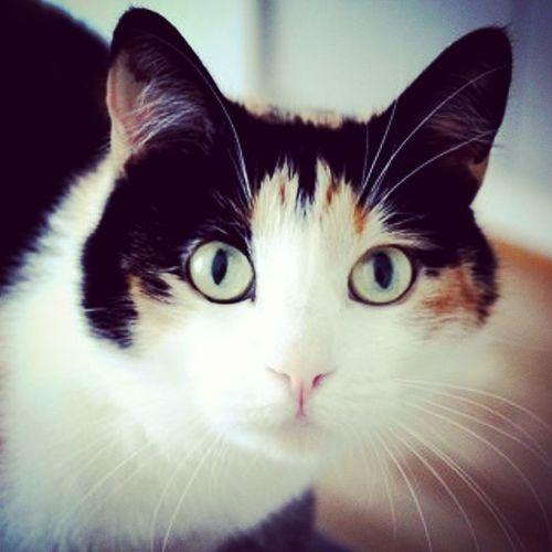 Cat Cats Cat♡ Finland First Eyeem Photo