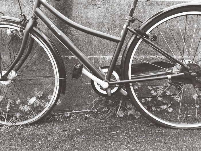 Bicycle Transportation Land Vehicle Wheel Mode Of Transportation No People Day