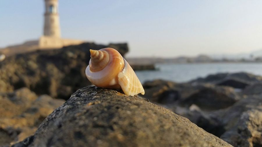 Conch Shell On Rock At Sea Against Sky