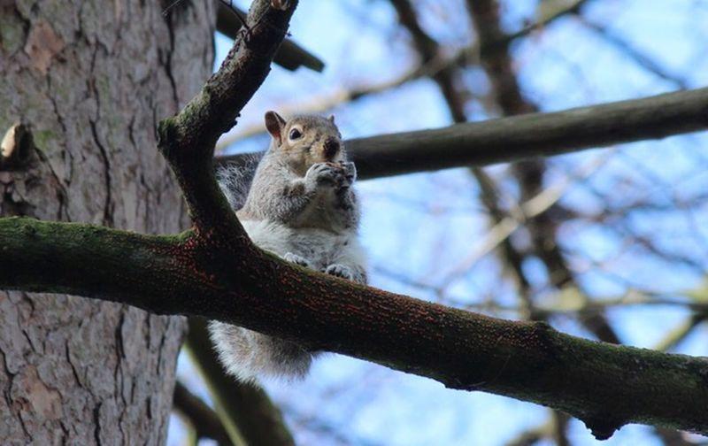 Squirrel Tree Animal Animal Themes Branch Animal Wildlife One Animal Mammal