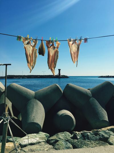 Fish drying at beach against clear blue sky