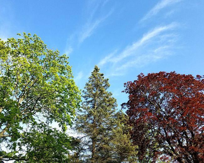 Three trees.