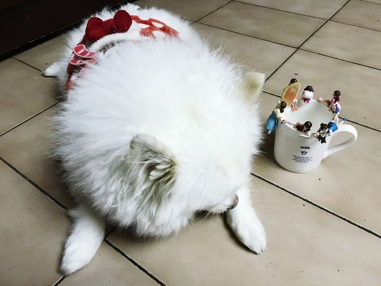 Indoors  Full Length One Animal Pets Domestic Animals Animal Themes No People Day Fuchiko OpenEdit Mammal Indoors