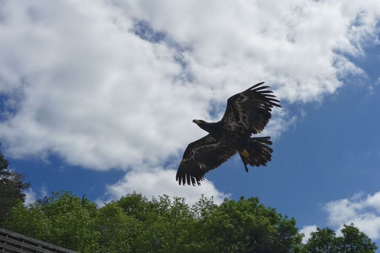 Avian Beauty In Nature Bird Bird Of Prey Blue Cloud Cloud - Sky Cloudy Courzieu Day Green Color Growth Low Angle View Nature No People Oiseaux Outdoors Parc Animalier De Courzieu Sky Spread Wings Tranquility Tree Wildlife