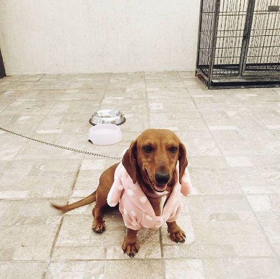 My baby ♡♡ Dog VSCO Dogsofinstagram Pet