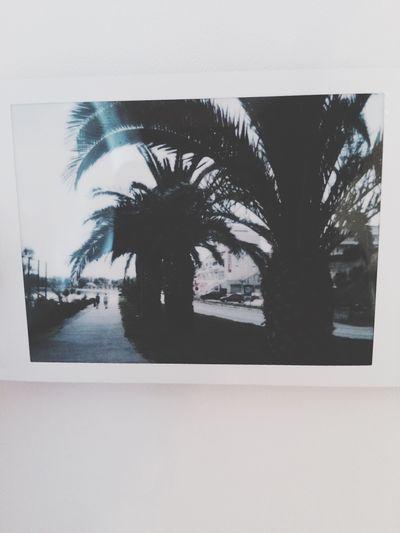 Palms Takingphotos Summer Beach Perfect Beautiful Polaroid Happy LastDay