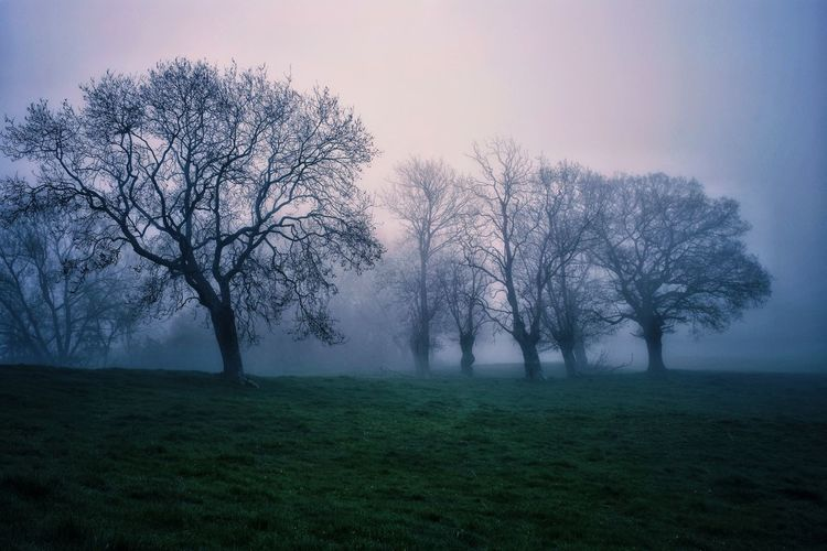 Foggy morning Morning Valley Tree Rural Scene Agriculture Foggy Fog Mist Sunrise - Dawn