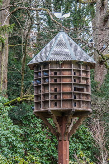 Annimals Pingeonair Animal Themes Annimals Branch Day Dove Dovecote Growth Nature Pingeonair Tree Wood - Material Outdoors