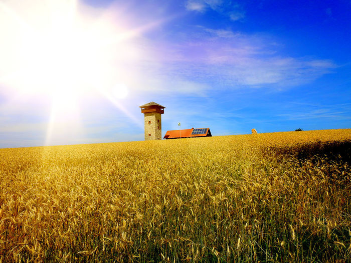 Sky Field Land Environment Agriculture Landscape Plant Nature Rural Scene Crop  Growth Cloud - Sky Farm Day Sunlight Beauty In Nature Tranquil Scene Scenics - Nature No People Horizon Outdoors Bright