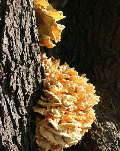 Tree Fungus Fungi