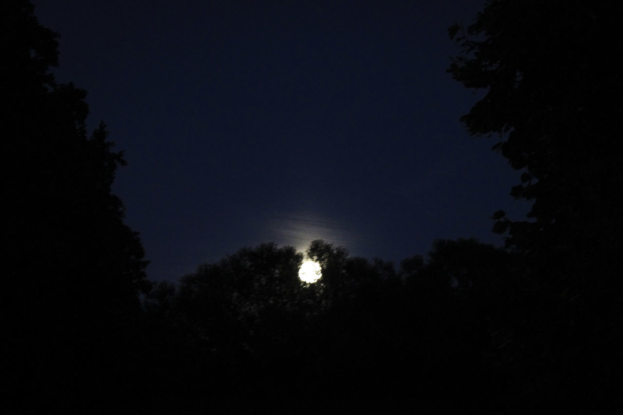 moon, night, tree, nature, dark, silhouette, beauty in nature, scenics, low angle view, sky, outdoors, tranquility, astronomy, tranquil scene, no people, moonlight, growth, half moon, crescent, space