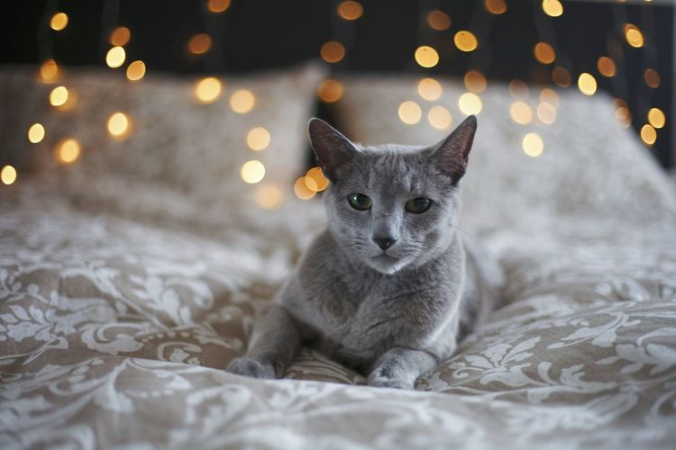 Cat relaxing on bed