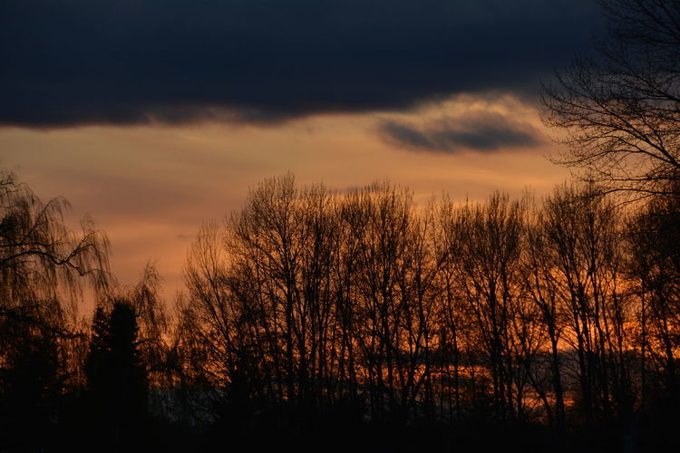 Silhouette bare trees against sky at sunset