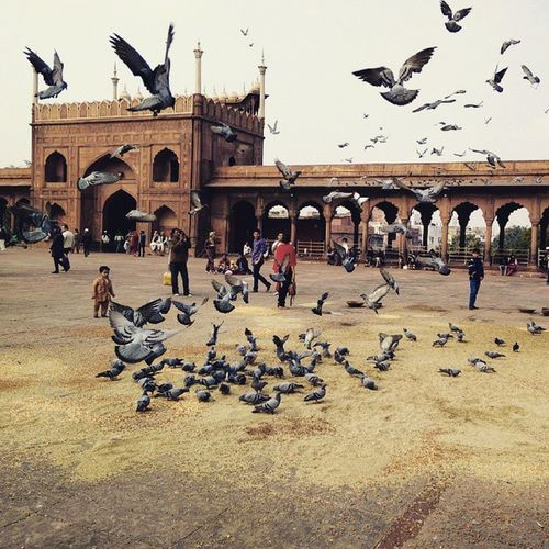 Delhi_igers JamaMasjid Delhi6 Kabootar Travelwithpadhaaro Panchhi