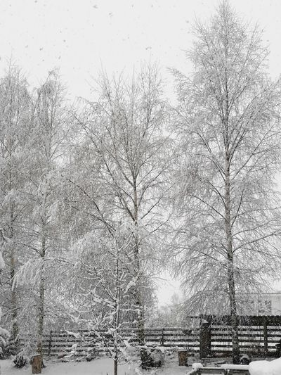 Black & White Friday Winter In April Day No People Full Frame Pattern Backgrounds Outdoors Winter Nature Tree Snow Sky Close-up Black And White Friday