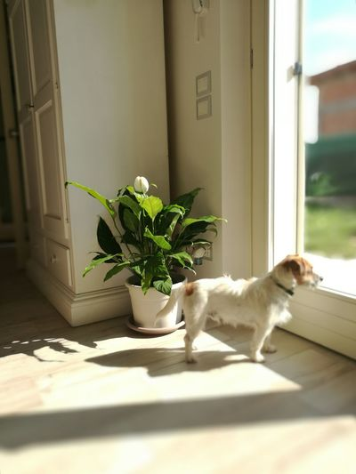 Dogs Of EyeEm House Plant Pensieroso Inside The House Thinking About You Thinking About.. Thinking Of You Waiting Waiting For You Waiting For Someone Pet Portraits