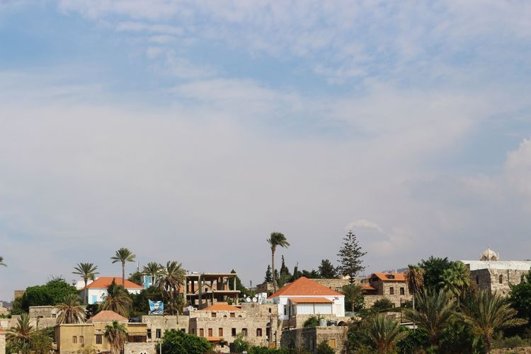 Palm Trees Cityscape Tree Palm Tree Cityscape City House Residential Building Sky Architecture Building Exterior Built Structure Housing Settlement Town TOWNSCAPE Old Town