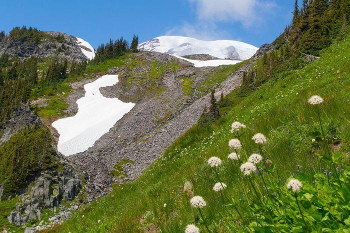 Snow Tranquil Scene Beauty In Nature Tranquility Scenics Nature Landscape Flower Mt. Rainier Mt. Rainier National Park