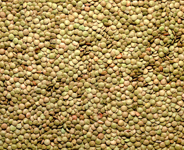 Abundance Agricolture Brown Lentils Food Gastronomy Italia Lentils Sicily Textured  Vegetables
