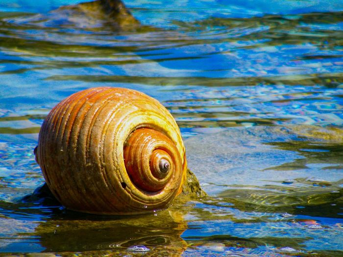 Shell Shells Huge Shell Marine Life Marine Animal Animals In The Wild Animal Wildlife Nature Water Animal Themes Sea Close-up Sea Life Beauty In Nature Blue Sea Greek Islands Live For The Story The Great Outdoors - 2017 EyeEm Awards Sommergefühle Perspectives On Nature