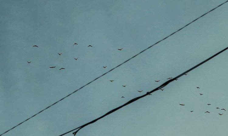 Shootermag Sun_collection, Sky_collection, Cloudporn, Skyporn Birds Canon PowerShot G1 X