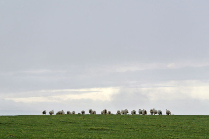 View of horses grazing in field against sky