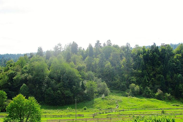Relaxing Nature Sammer Mountains Forest