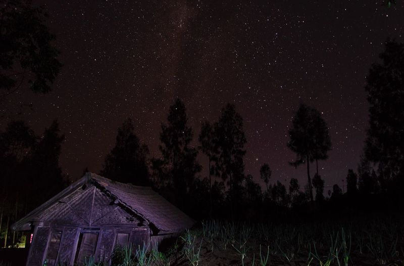 stars Milky Way Bromo Night Photography Night Star - Space Space Galaxy Astronomy Sky Space And Astronomy Beauty In Nature Tree Star Field Scenics - Nature No People Constellation Tranquility Nature Star Plant Landscape Tranquil Scene Infinity HUAWEI Photo Award: After Dark
