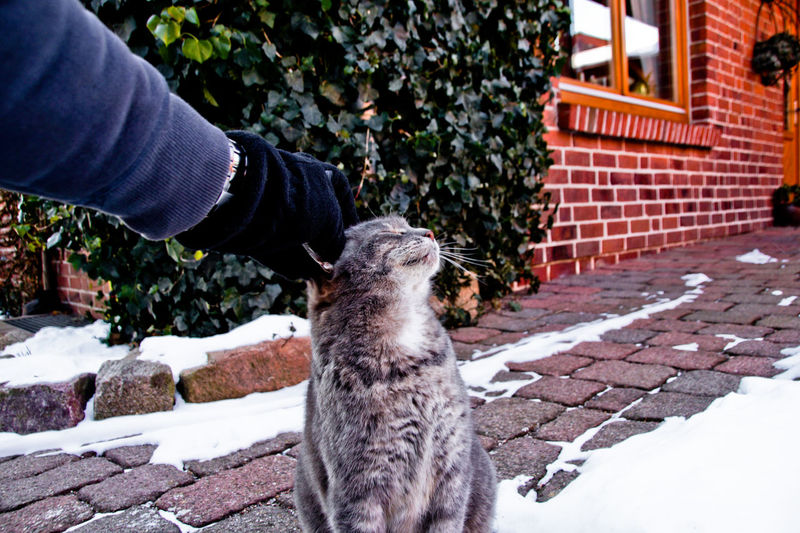 Cropped hand petting cat on snow covered footpath