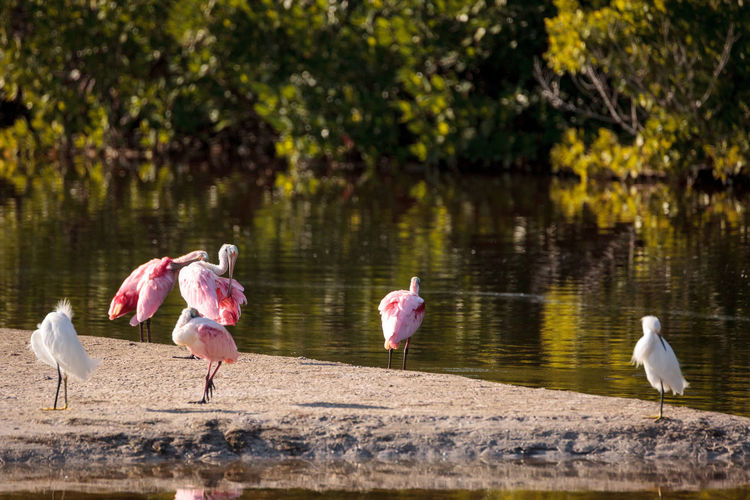 Birds by lake