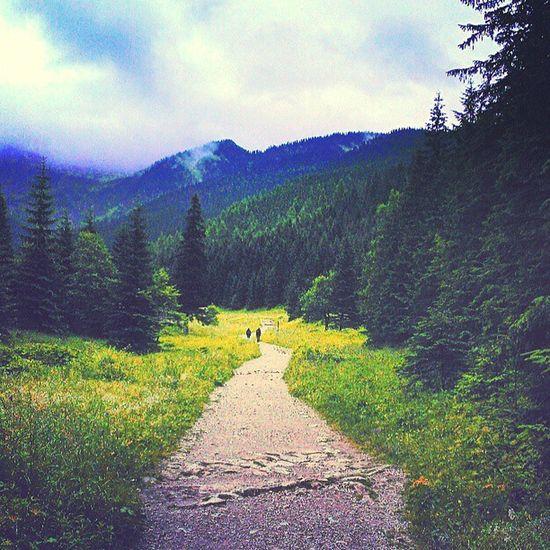 Jestpieknie Tatras Road path mountains forest poland landscape walking hiking nature valley tatry góry trip tagsforlikes tflers instagood tweegram photooftheday me instamood cte picoftheday