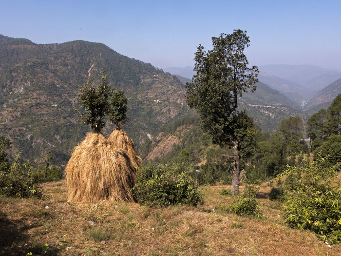 Field Hay Bale India Overgrown Rural Agricultural Land Beauty In Nature Clear Sky Dry Field Forest Grass Grass Field Hay Landscape Meadow Mountain Mountain Range Nainital Outdoors Scenics Sky Tree Uttarakhand Wooded