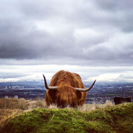 Animal Themes Beauty In Nature Cloud Cloud - Sky Cloudy Cow Day Farm Animals Focus On Foreground Grass Highland Cattle Highland Cow Highland Cows Landscape Mammal Nature No People Non-urban Scene Outdoors Overcast Scenics Scotland Scottish Animals Sky Weather