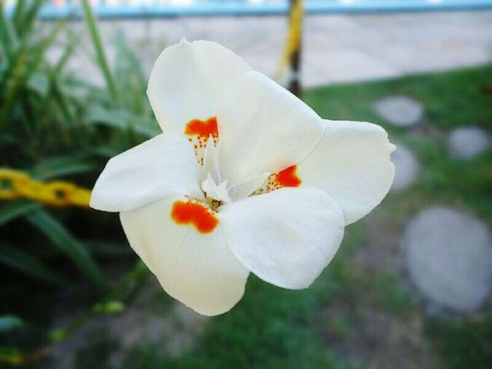 Flower 🌼 Taking Photos