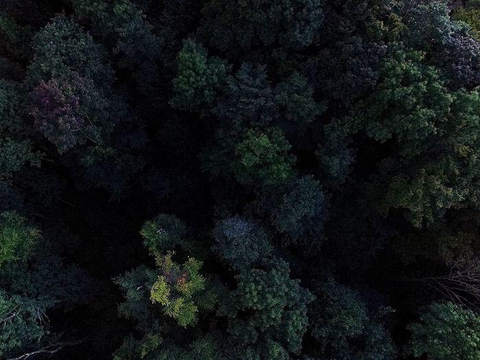 Full frame shot of dead plants