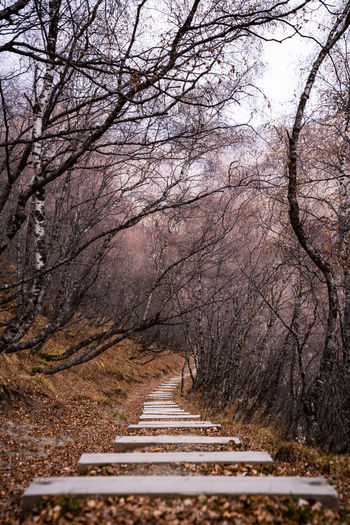 Empty road along bare trees in forest