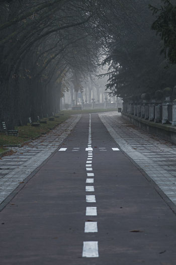 cycle path in Burgos, Spain ©alexander h. schulz Burgos Castilla Y León Lines Misty Perspective SPAIN Travel Bare Tree Bicycle Branch Crossing Cycle Path Day Fog Grey Lane Mist Misty Morning No People Outdoors Road The Way Forward Tree