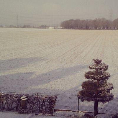 Just powdery white everywhere.