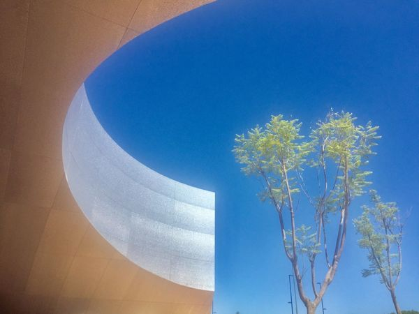 Architecture Summer Summertime Plant Blue Sky Low Angle View Nature No People Flowering Plant Plant Blue Sky Low Angle View Nature No People Flowering Plant Growth Day Tree Sunlight Outdoors Built Structure Architecture Clear Sky