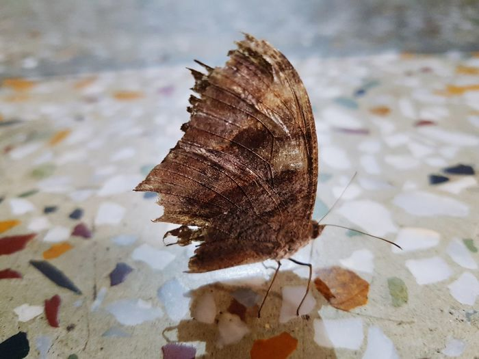 Close-Up Of Moth On Floor