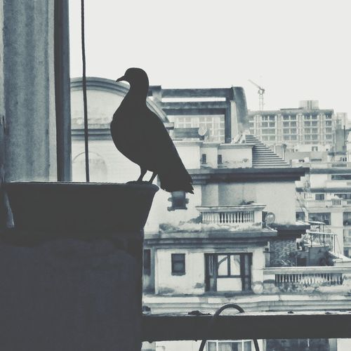 Close-up of bird perching on city against clear sky