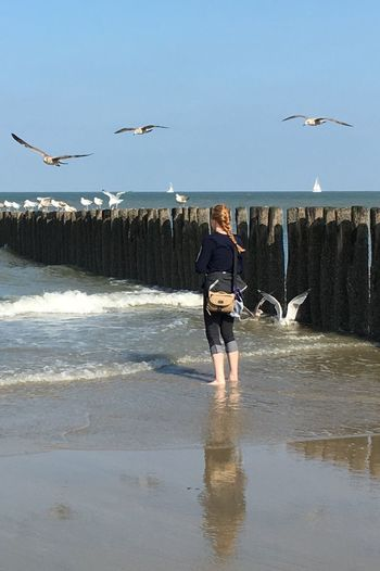 Cadzand Holland Strand Beach Möven Seagulls Vogel Meer Sea And Sky Sea