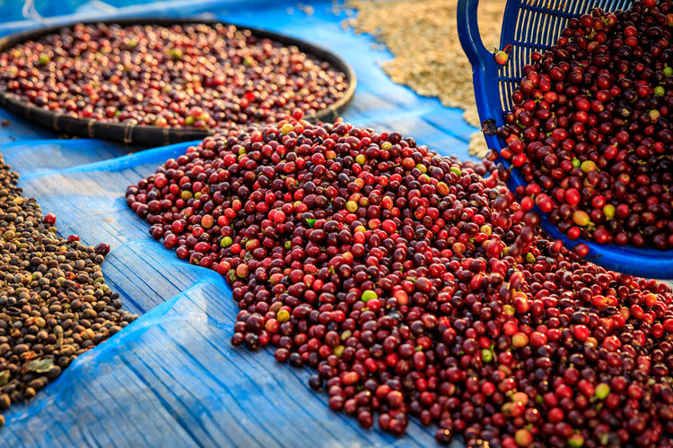 Raw coffee beans dry on shelf in the nature