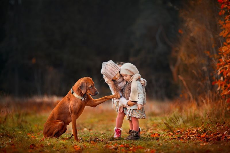 Little with dog in autumn park Sisters Full Length One Animal One Person Children Only Grass Childhood EyeEmNewHere Animal People Pets Walking Dog Animal Themes Autumn Outdoors Child Nature Domestic Animals Rural Scene One Girl Only Day