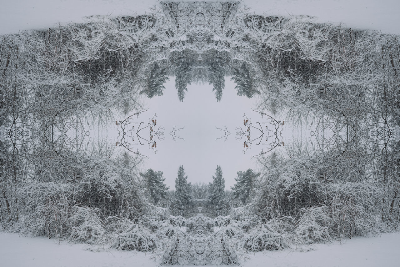 DIGITAL COMPOSITE IMAGE OF TREES ON SNOW COVERED LANDSCAPE