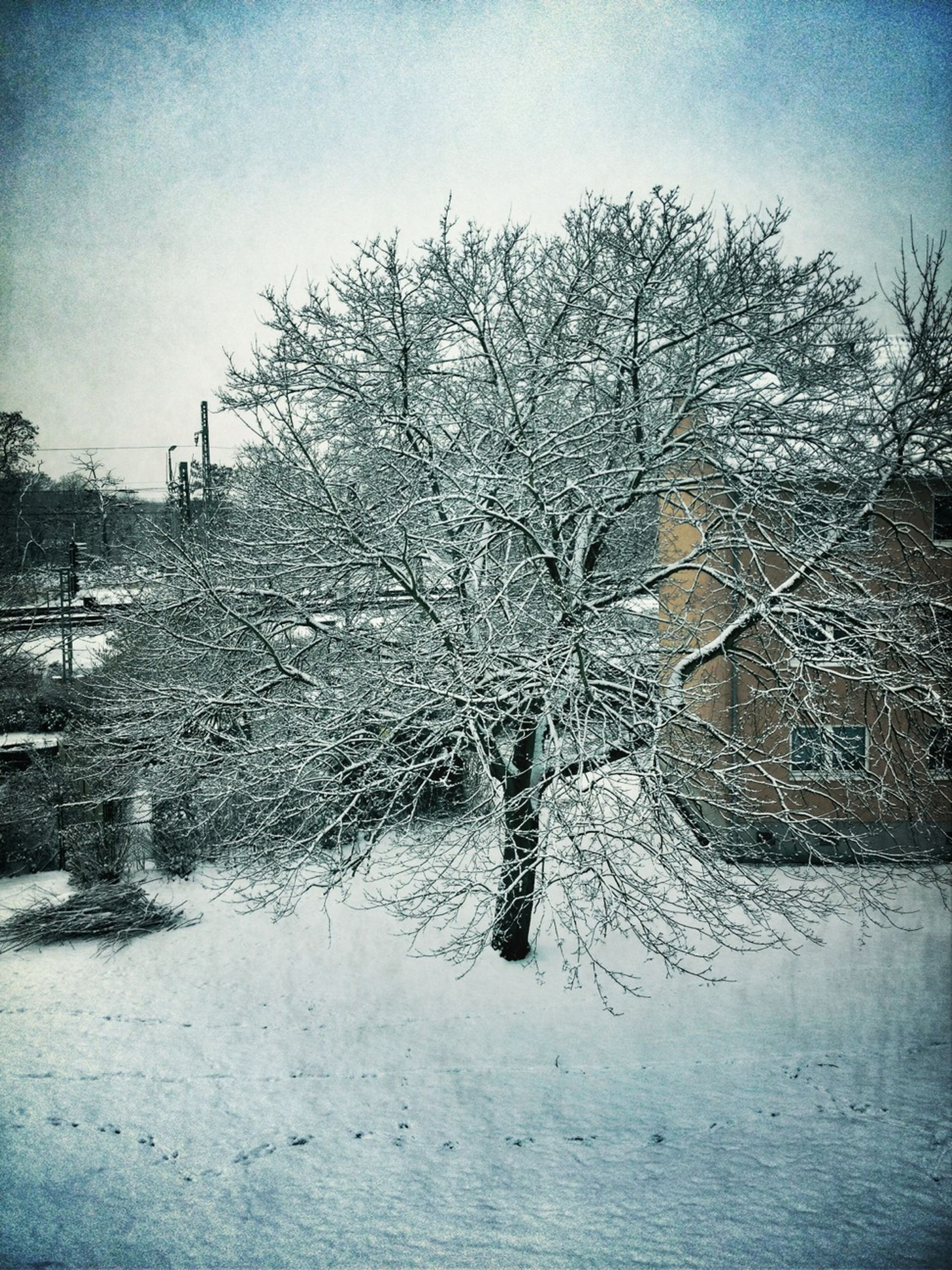 snow, winter, cold temperature, season, bare tree, weather, covering, field, frozen, tree, tranquility, nature, landscape, tranquil scene, sky, covered, white color, beauty in nature, scenics, branch